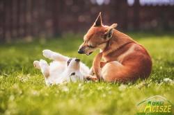 Pieski w ogrodzie