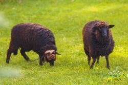 Zwierzęta w gospodarstwie